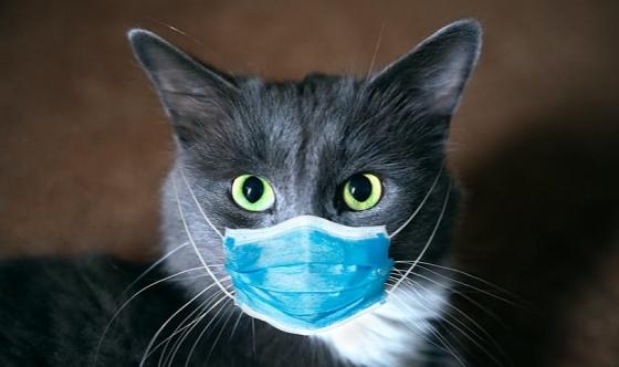 Kedisi olanlar dikkat! COVID-19 tehlikesi…